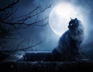 gato-y-luna-llena