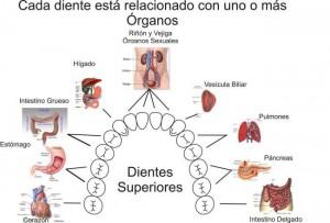 DIENTESORGANOS