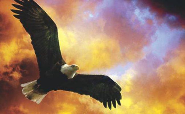 La-sabiduría-del-águila-lbulunxrqs3c70a04acgry4tfrs29h3wk7eclq1pnk